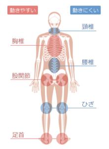 体のよく動く部分と動きにくい部分の図